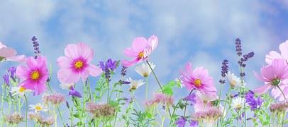 wild-flowers-571940__180